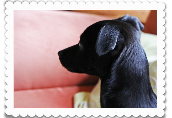Mona my Baby dog by RosiLorz