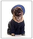 Cute Pug wearing hat and sweater by Edward Fielding