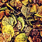 Autumn leaves by Alex Martin