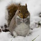 gray squirrel in the snow by Brett Watson Stand By Me  Ethiopia
