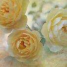 Heirloom Yellow Roses II by Lynn Starner