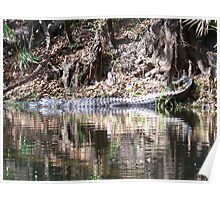 Gators on the Bank 4 Poster