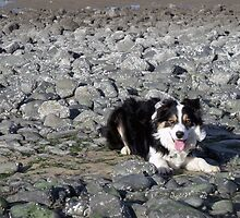 Laddie on the beach. by Michael Haslam
