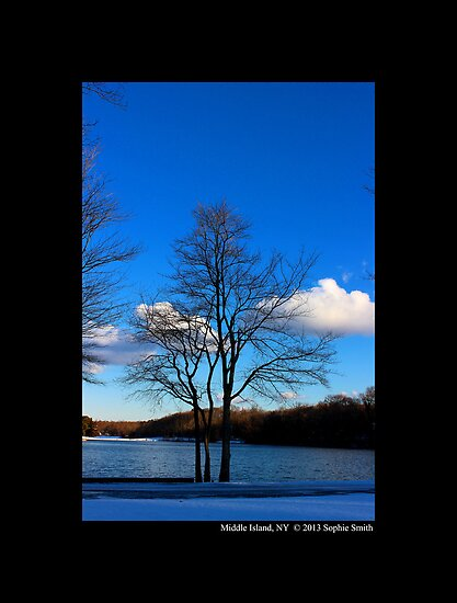 Young Trees In Front Of Spring Lake, Middle Island NY by © Sophie W. Smith