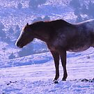 January's Horse by Betty E Duncan © Blue Mountain Blessings Photography