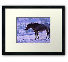 January's Horse Framed Print