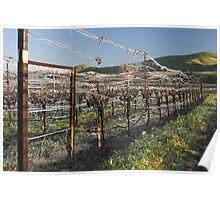 Ice Vines Poster