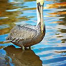 Brown Pelican along the Bayou by Jonicool