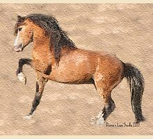 Welsh Mountain Stallion by Diana-Lee Saville
