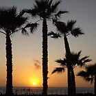 Sunset Through the Palms by seeingred13