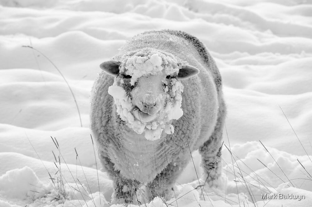 Winter Woolie by Mark Baldwyn