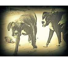 Boxers At Play Photographic Print