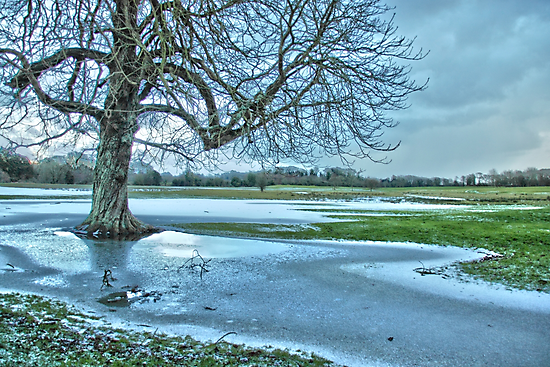 An icy day at the park by Martina Fagan