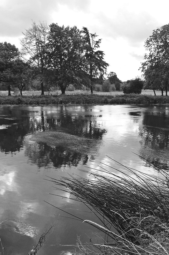 The Wind-swept River Trent at Stapenhill by Rod Johnson