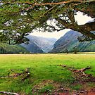 Matukituki Valley, NZ by andreisky