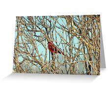 Cardinal I Greeting Card