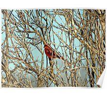 Cardinal I Poster