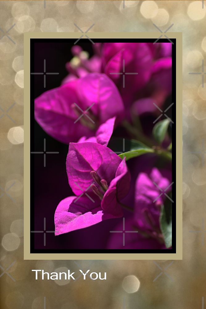 Thank You - Bougainvillea Flowers by Joy Watson