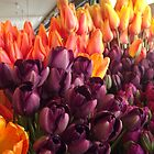Profusion of Color by seeingred13