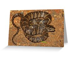 Midland Water Snake  Greeting Card