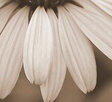 A Ripple of Petals by MichelleAyn