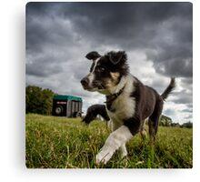Bordercollie pup Canvas Print