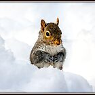 Snow Squirrel by Mikell Herrick
