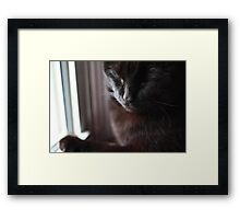 Sleeping Framed Print