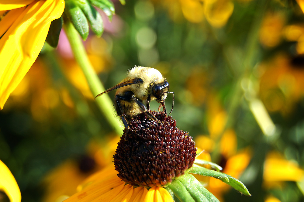 Busy Bee by d1373l