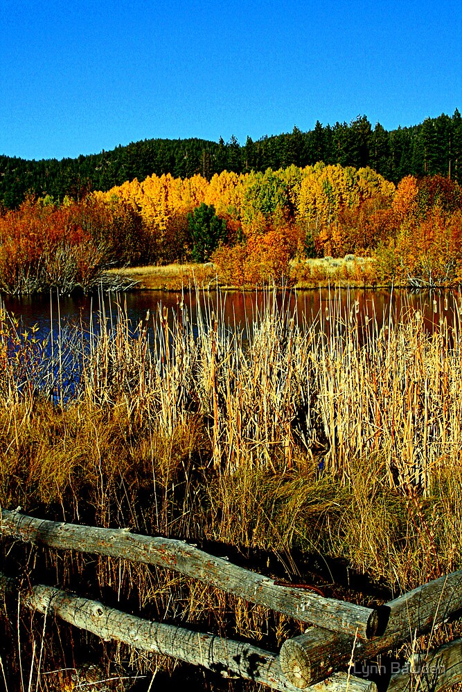 "Tahoe Pond"" by Lynn Bawden"