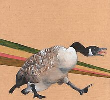 Canadian Goose by NancyBenton