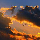 Birds in Flight  by sandralee1989