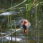 Swimming  by HuntrRose