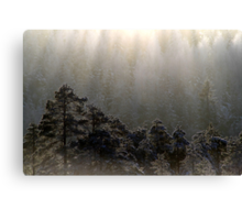 23.1.2013: Forest and Light Canvas Print