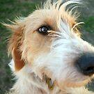 He's a dog by Meg Blake