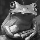 Still life frog by James Suret
