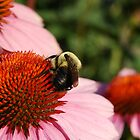 Busy Bee 4 by d1373l