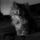 mmeow!! by anum altaf