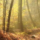 Autumn forest in the morning by matheorsi