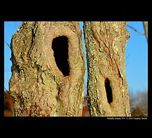 Natural Tree Hollows by © Sophie W. Smith