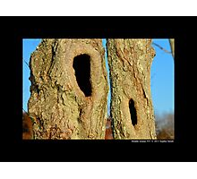 Natural Tree Hollows Photographic Print