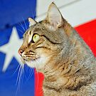 Texas Cat by EmmaLeigh