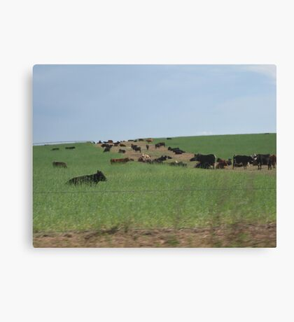 Rural Life Canvas Print