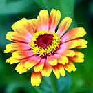 Rainbow Flower by James Iorfida