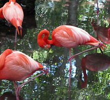 Pink Flamingo's by thewilsons80