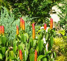 Red Plants by amazingcat