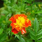 Orange Flower by amazingcat
