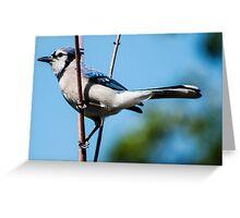 I Am A Pretty Bird!! Greeting Card