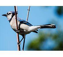 I Am A Pretty Bird!! Photographic Print