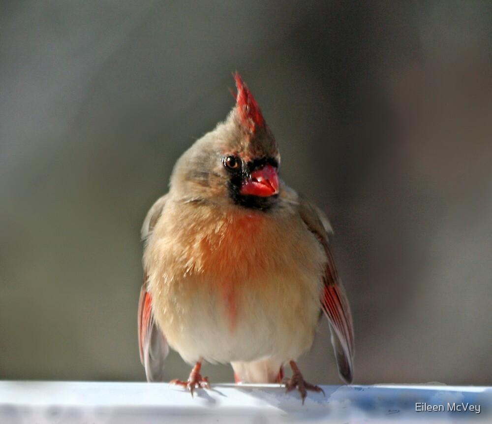 Cold Cardinal by Eileen McVey
